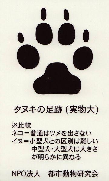 タヌキの足跡.jpg